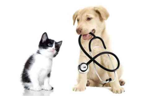 Online City Training - Online Veterinary Care Practitioner Course - Save 91%