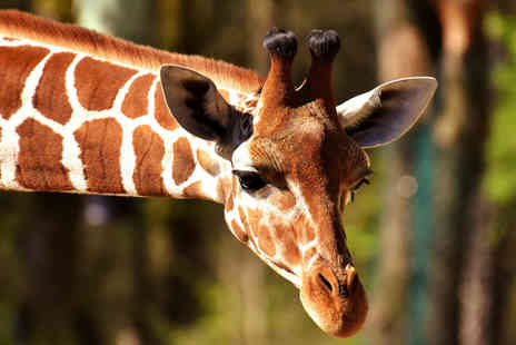 Safari Zoo - Lemur or giraffe experience - Save 54%