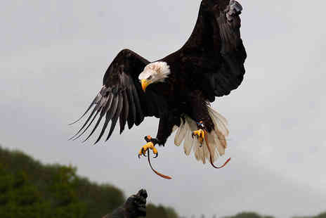 Xtreme Falconry - Two hour hawking experience for one o two - Save 71%