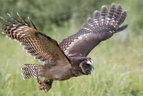 CJ S Birds of Prey - Birds of Prey or Owl Encounter Experience for One or Two - Save 80%