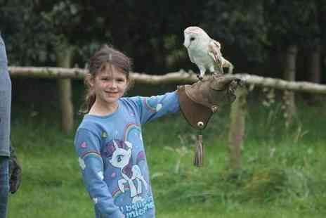 Xtreme Falconry - 90 minute junior falconry experience for one with one adult permitted for supervision - Save 71%
