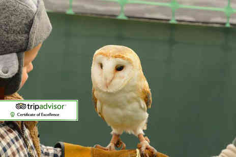 Fixter Falconry - 90 minute falconry experience for one or two - Save 72%