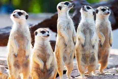 The Animal Experience - Meet the meerkats experience for 2 - Save 54%