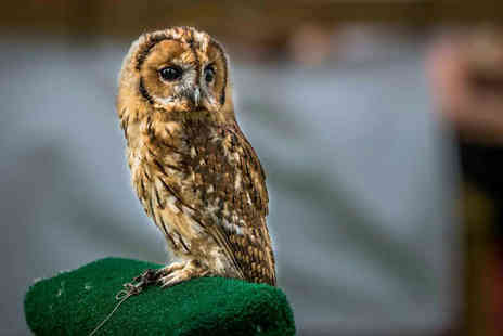 CJs Birds of Prey - Two hour birds of prey experience or owl encounter for one person - Save 80%