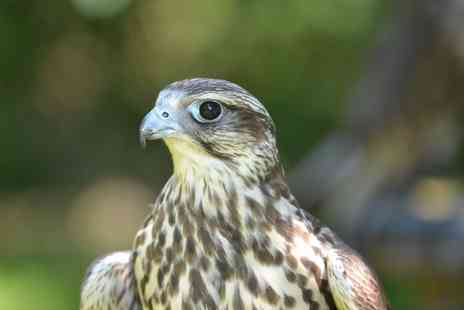 Hawk on the Wild Side - 60 Minute Falconry Experience for Up to Four - Save 32%