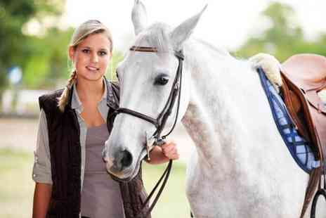 Buyagift - One hour horse riding experience - Save 0%