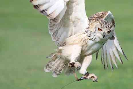 Hawk on the Wild Side - One Hour Owl Experience for One, Two or Four - Save 50%