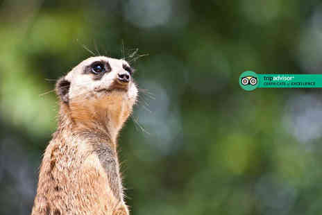 Hawks of Steele - Hour long Meet the Meerkats experience for one or two - Save 62%