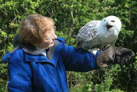 Hawk on The Wild Side - One hour owl experience for one or two - Save 50%