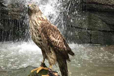 Riverside Falconry - Group Bird of Prey Handling Session or Hawk Walk for Up to Six - Save 63%