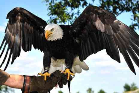 Eagle Heights - Entry for One or Two at Eagle Heights Animal Sanctuary - Save 40%