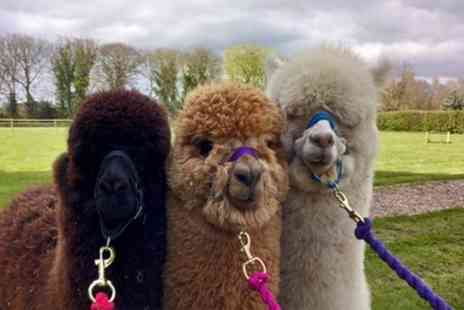 Woodland View Alpacas - Two Hour Alpaca Trek for Two or Four - Save 52%