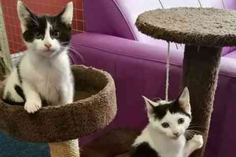 Catisfaction Cat Cafe - One Hour Entry with Free Flowing Tea, Coffee and Cake for One, Two or Five - Save 38%