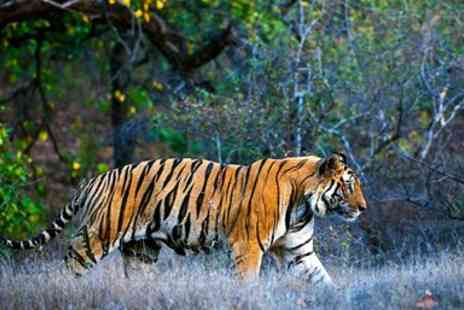Exoticca - Luxury Golden Triangle tour & tiger safari - Save 0%