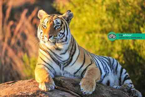 Safari Zoo - Big cat feeding and zoo keeper experience for one person - Save 53%