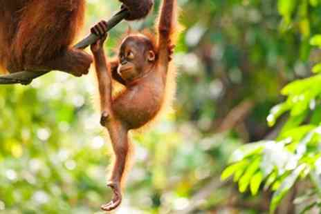 Falcon and Sachz Tours - Eight night Borneo tour with excursions excluding flights - Save 0%