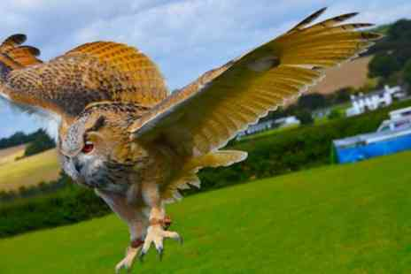 Cjs birds of prey - Educational Birds of Prey or Owl Encounter Experience for One or Two at CJ's Birds of Prey (Up to 79% Off) - Save 77%