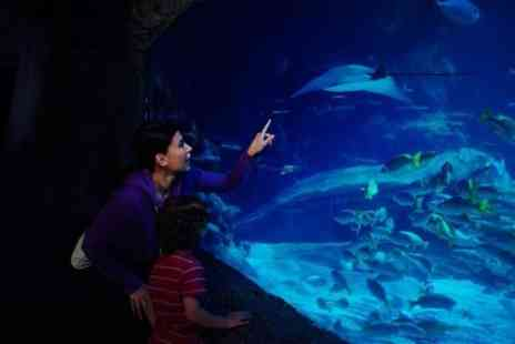 Sea Life Blackpool - Sea Life Blackpool Admission Ticket - Save 0%