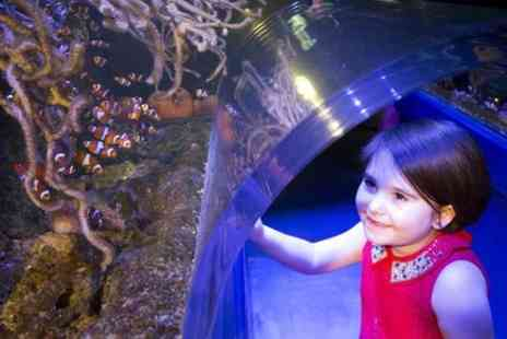 Sea Life Manchester - Sea Life Manchester Admission Ticket - Save 0%