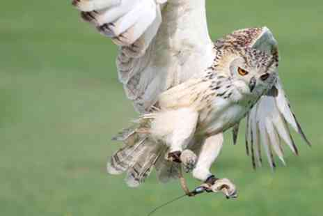 Hawk on the Wild Side - One Hour Owl or Falconry Experience for Up to Four - Save 32%