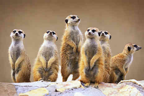 Kirkleatham Owl Centre - Half day meerkat and birds of prey experience for one person - Save 71%
