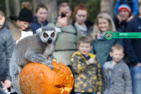 Yorkshire Wildlife Park - Two adult or Family tickets to the Creepy Carnival experience - Save 50%