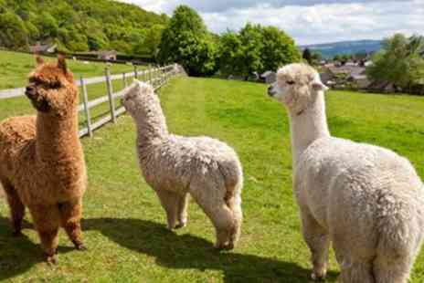 Charnwood Forest - 90 min alpaca walking experience - Save 60%
