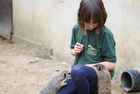 Millets Falconry Centre - Meet and Feed the Meerkats for Two - Save 20%