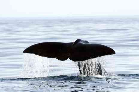 Whales & Orcas Encounters - Spot Whales, Orcas, Puffins and More in Northern Norway - Save 0%