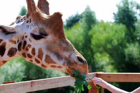 Safari Zoo - Giraffe experience including zoo admission, a cuddly toy and gift box - Save 59%