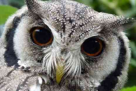 Kirkleatham Owl Centre - Twilight Owl Experience for Two or Four - Save 48%
