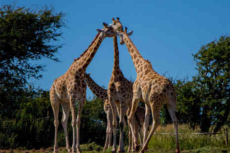 Safari Zoo - Giraffe adoption pack - Save 60%
