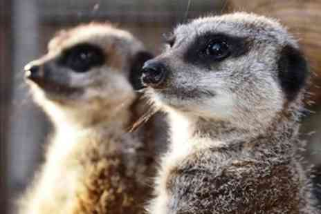 Zoo2U - Meet the Meerkat or Skunk Experience for One or Two - Save 0%