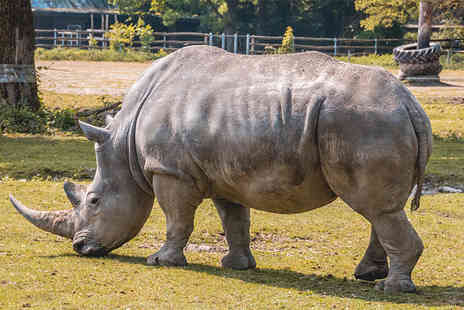 Safari Zoo - Rhino adoption including zoo admission with a penguin and giraffe handfeeding experience, a cuddly toy and gift box - Save 54%