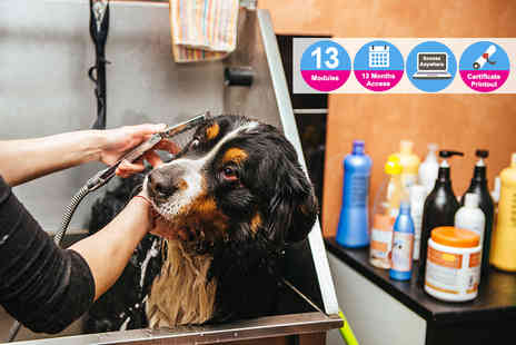 Vizual Coaching - Advanced pet grooming course - Save 91%