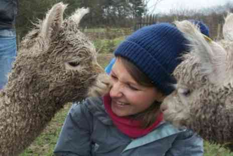Charnwood Forest - 90 Minute Walk with Alpacas and Drink for One or Two - Save 46%