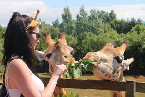 Safari Zoo - Giraffe adoption including zoo admission, a cuddly toy and gift box - Save 68%