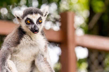 Safari Zoo - Lemur feeding experience, a cuddly toy with gift box and admission to Safari Zoo - Save 36%