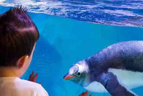 SEA LIFE - Sea Life Centre Birmingham Have an Underwater Adventure - Save 32%