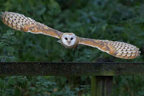 Stockley Birds of Prey - One hour hawk walk birds of prey experience for one person - Save 62%