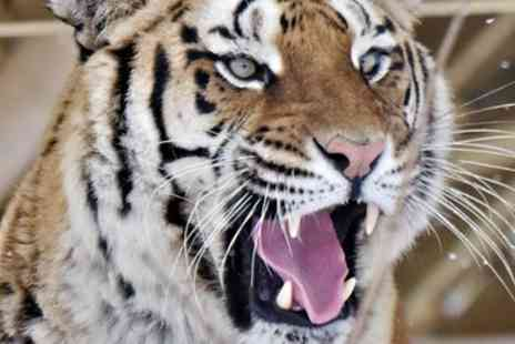 Lincolnshire Wildlife Park - Tiger Tour or Tiger Experience for Up to Four - Save 30%