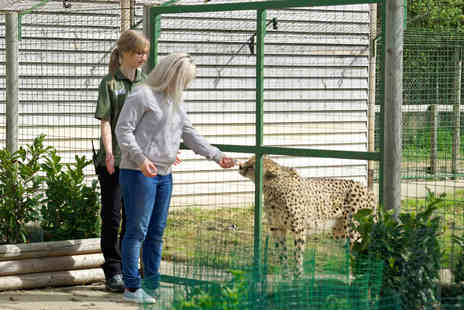 Virgin Experience Days - Big Cat Ranger for a Day For Weekends - Save 0%