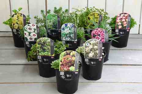 Groupon Goods Global GmbH - Six or Ten Seasonal Alpine or Rockery Collection Plants - Save 17%