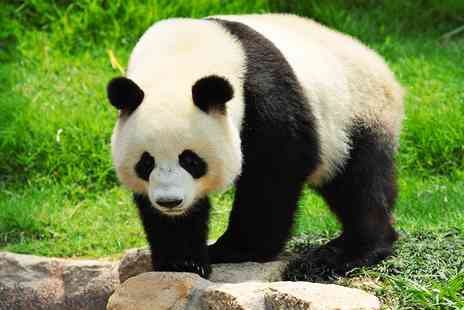 Wendy Wu Tours - Eight nights China tour including pandas and free companion flight - Save 0%