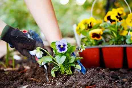Green Island Gardens - All day gardening class in Essex - Save 41%