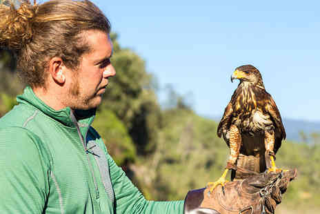 Herrings Green Activity Farm - Three hour Raptor and Reload bird handling and target shooting experience for one - Save 76%