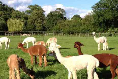 Pennybridge Alpacas - Two hour Alpaca experience for two people - Save 50%