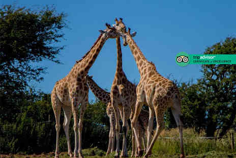 Safari Zoo - Entry for a family of four to Safari Zoo - Save 32%