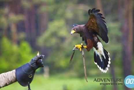 Adventure 001 - Three Hour Falconry Experience for One or Two - Save 0%