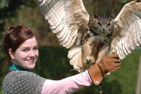 The Hawking Centre - 1 Hour Falconry Experience - Save 0%